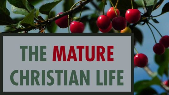 Red Cherries on a tree with The Mature Christian Life